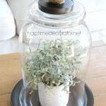DIY Glass Cloche