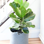 5 Easy Indoor Plants (Even I Can Keep Alive!)